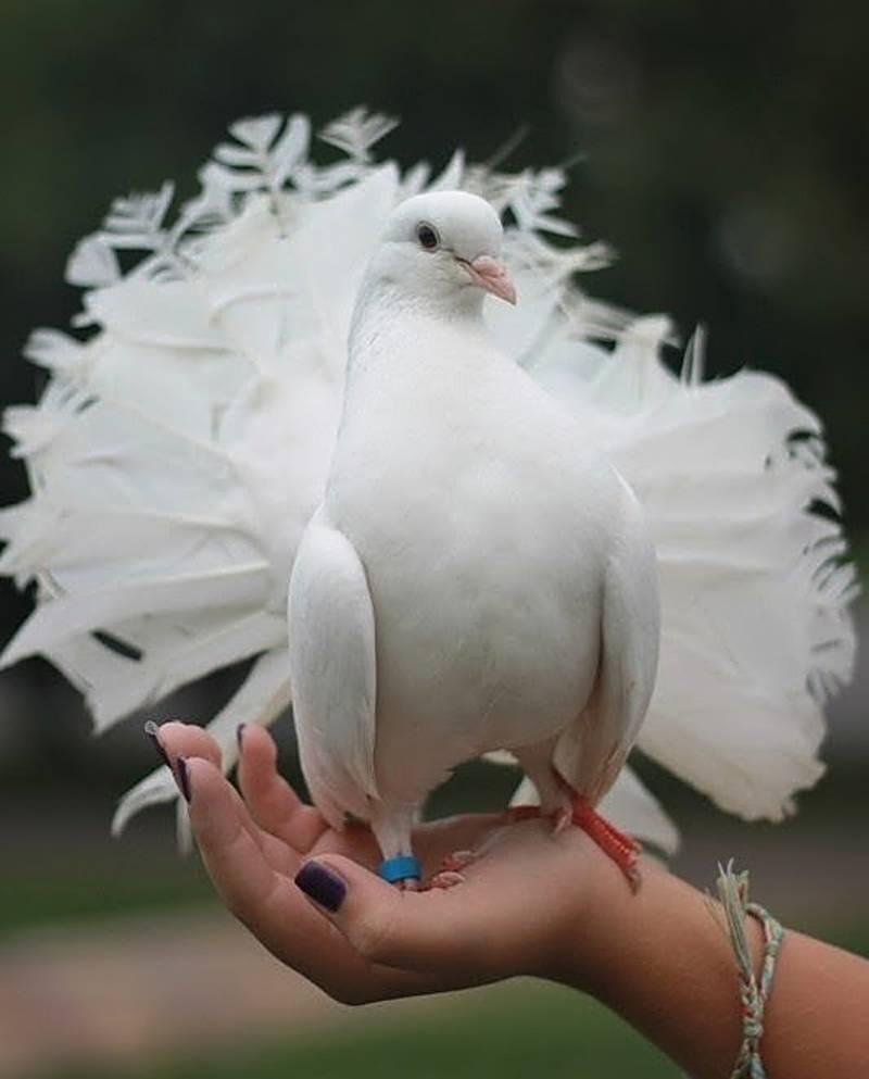 Наши ребята знакомились и фотографировались с Птицами мира